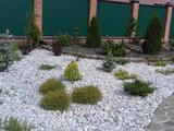Дизайн участка, выезд агроном, посадка газона