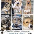 Собаки в добрые руки